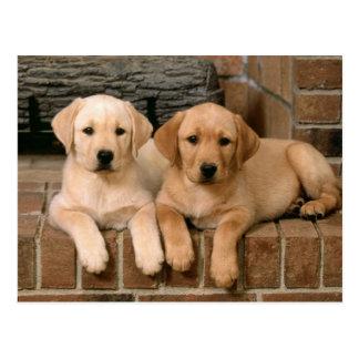 Cartão Postal Labrador retriever amarelo