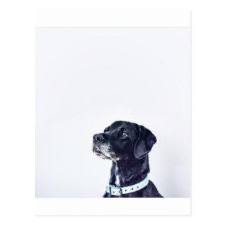 Cartão Postal Labrador retriever preto customizável