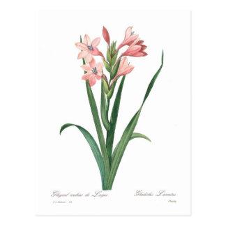 Cartão Postal Laccatus do tipo de flor