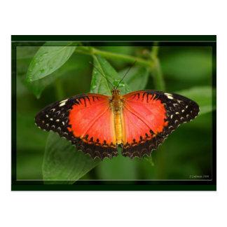 Cartão Postal Lacewing vermelho