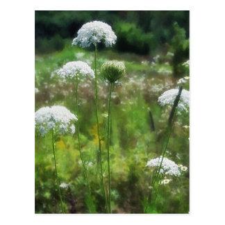 Cartão Postal Laço 2 da rainha Anne floral