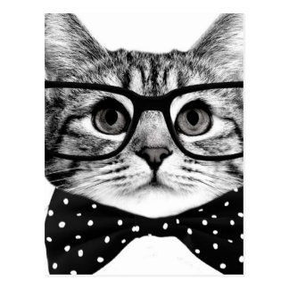 Cartão Postal laço do gato - gato dos vidros - gato de vidro