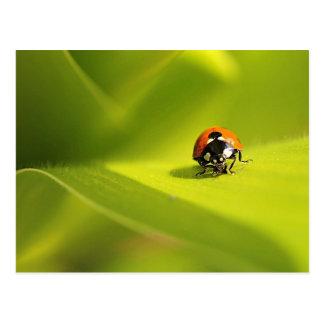 Cartão Postal ladybug