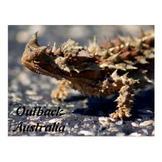 Cartão Postal Lagarto espinhoso do diabo, interior Austrália,