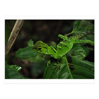 Cartão Postal Lagarto verde de Amazonas