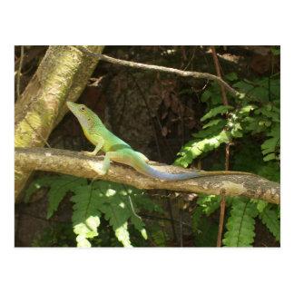 Cartão Postal Lagarto verde jamaicano
