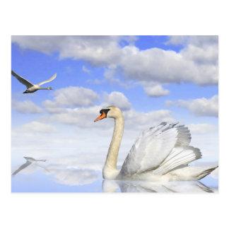 Cartão Postal Lago de cisne