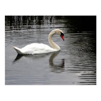 Cartão Postal Lago swan