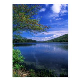 Cartão Postal Lagoa da floresta do estado da montanha de outubro