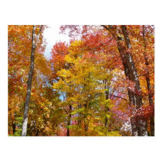 Cartão Postal Laranja e fotografia do outono das árvores da