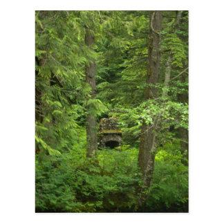Cartão Postal Lareira nas madeiras