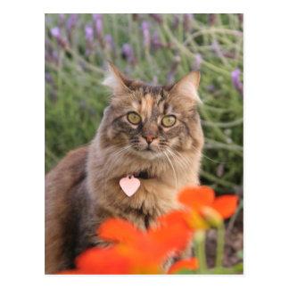 Cartão Postal Lavendar, chagas, e um gato da concha de tartaruga