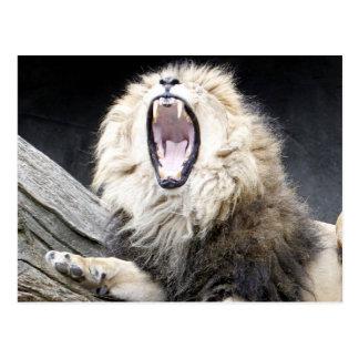 Cartão Postal leão cansado