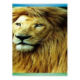 Cartão Postal Leão com beira do arco-íris