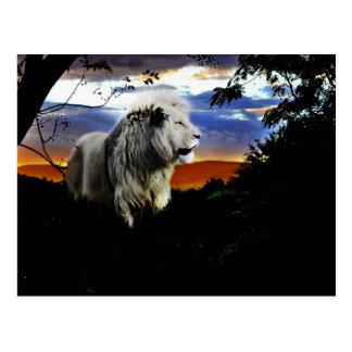 Cartão Postal Leão de África do Sul na selva