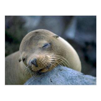 Cartão Postal Leão de mar do bebê, Ilhas Galápagos