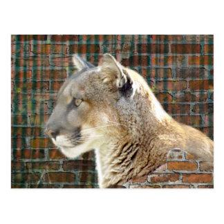 Cartão Postal Leão de montanha/puma
