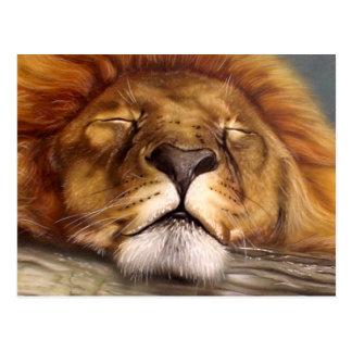 Cartão Postal Leão do sono