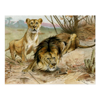 Cartão Postal Leão e leoa