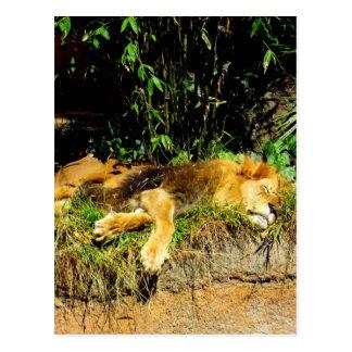 Cartão Postal Leão preguiçoso