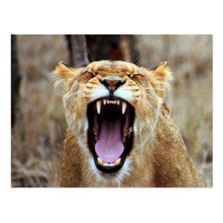 Cartão Postal Leão que boceja