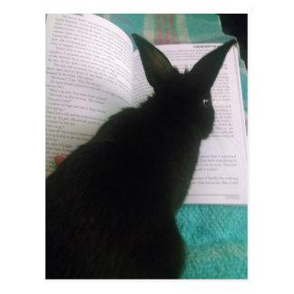 Cartão Postal Leitura do coelho