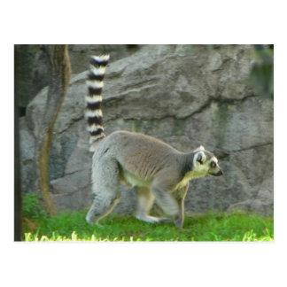 Cartão Postal Lemur