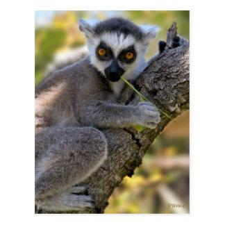 Cartão Postal Lemur atado anel do bebê