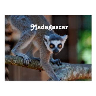 Cartão Postal Lemur de Madagascar