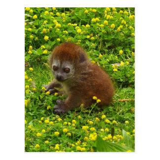 Cartão Postal Lemur delicado de Alaotran do bebê