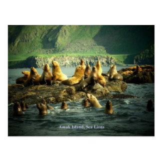 Cartão Postal Leões de mar da ilha de Amak