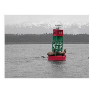 Cartão Postal Leões de mar em Juneau, Alaska