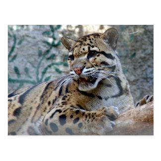Cartão Postal leopard-1 nublado 4x6