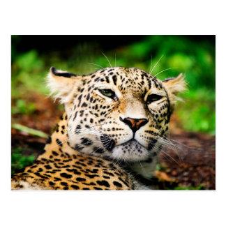 Cartão Postal Leopardo