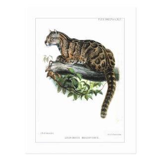 Cartão Postal Leopardo nublado