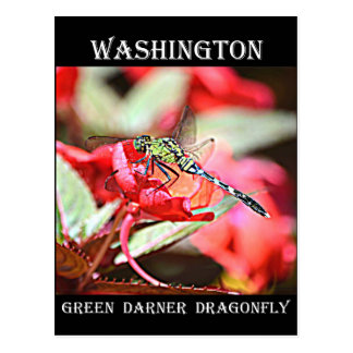 Cartão Postal Libélula verde de Washington Darner