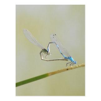 Cartão Postal libélulas no amor