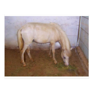 Cartão Postal Lil Pony-2