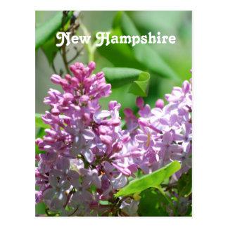 Cartão Postal Lilacs de New Hampshire