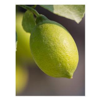 Cartão Postal limão