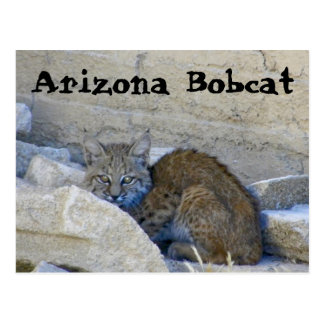 Cartão Postal Lince da arizona