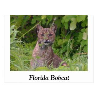 Cartão Postal Lince de Florida