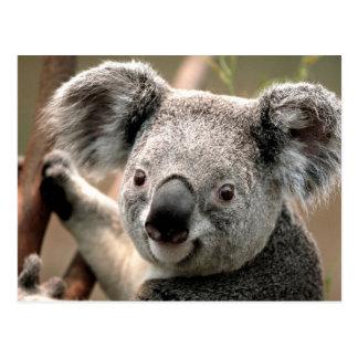 Cartão Postal Linha do Koala