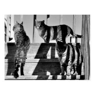Cartão Postal Linhas de gato