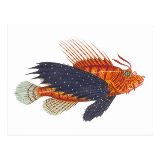 Cartão Postal Lionfish - Pterois - gravura da antiguidade dos