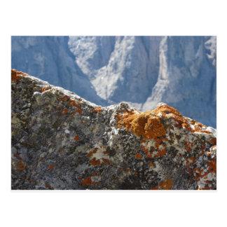 Cartão Postal Líquenes alaranjados que crescem na cara da rocha