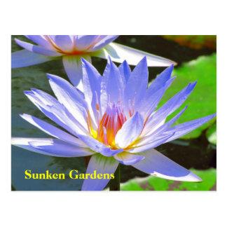 Cartão Postal Lírio de água azul #106N do SG 0106