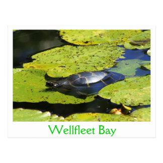 Cartão Postal Lírio de água pintado da tartaruga