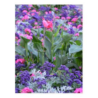 Cartão Postal Lírio de calla cor-de-rosa no jardim do primavera
