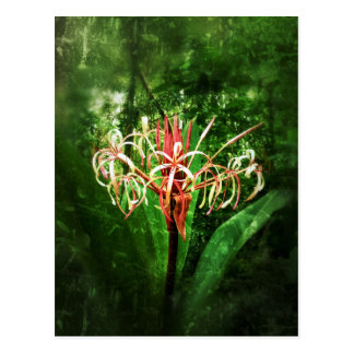Cartão Postal Lírio romântico da aranha vermelha do vintage